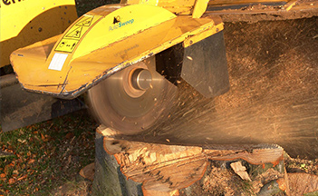 Stump Grinding and Treatment