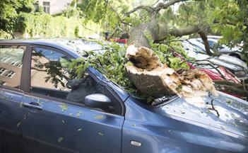 tree-accident