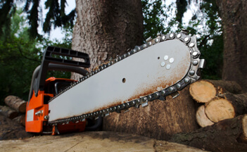 tree-surgeon-in-suffolk