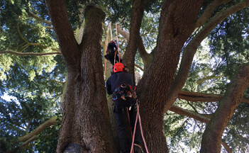 Pruning and Crown Reductions