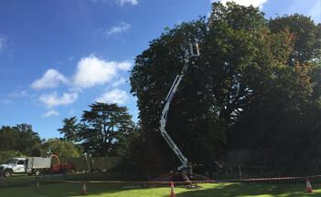 Tree Surgeons In Suffolk